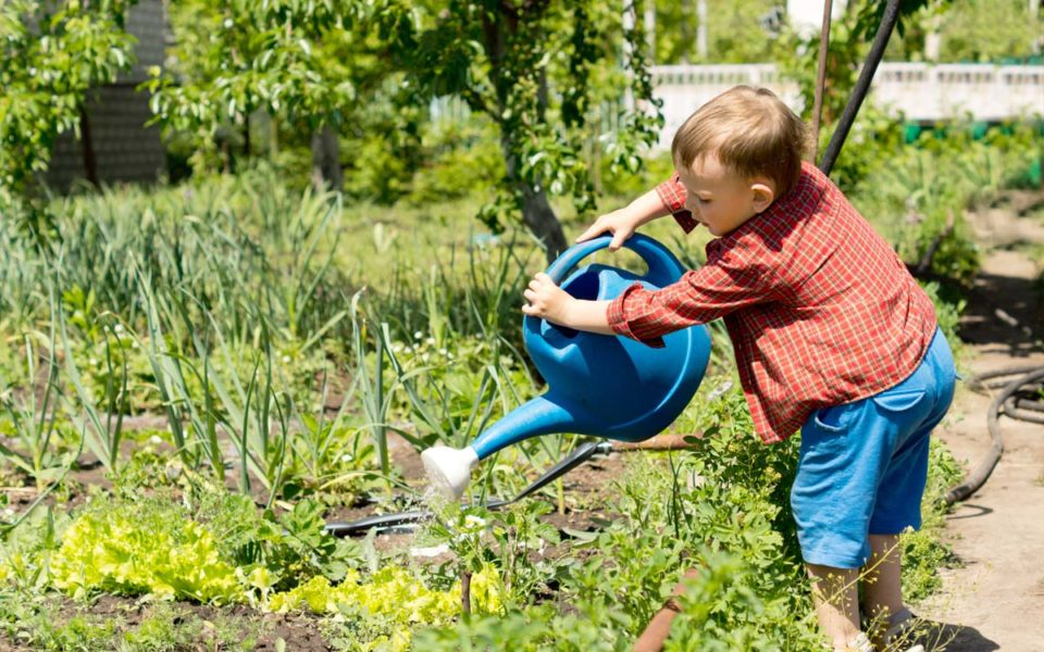 young boy watering rows of vegetables